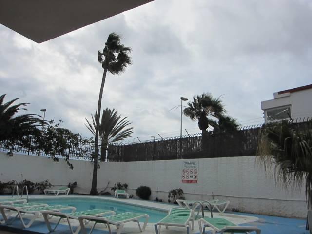 Det blåser i palmekronene