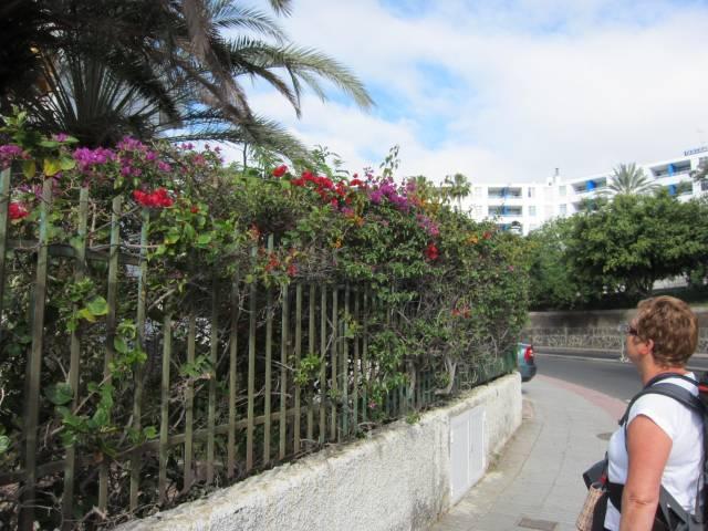Blomstene i Playa del Inglés må bli igjen.