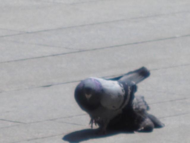 Ei due som ikke ser at seksualpartneren er flat og svært død.