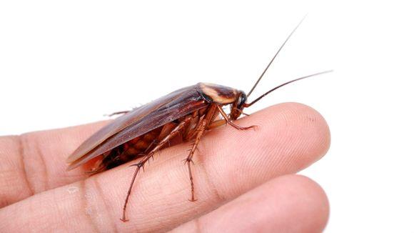 2020 01 12 - kakkerlakker